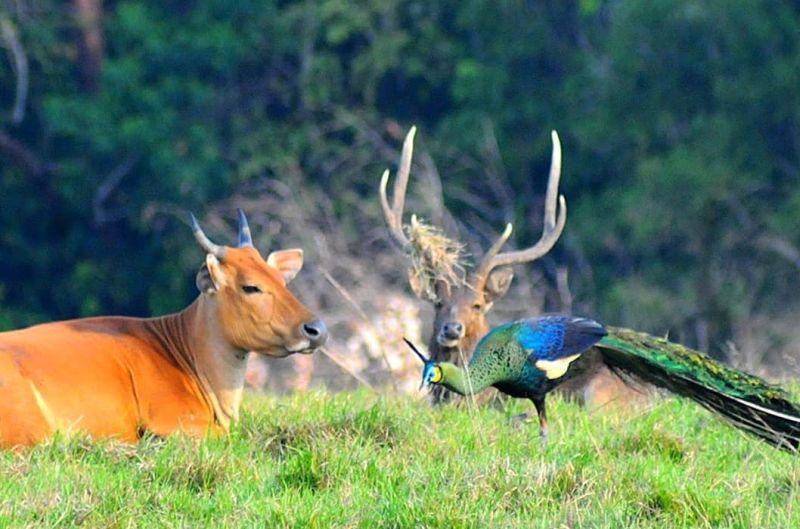 https: img.okezone.com content 2021 05 02 406 2404371 kesadaran-masyarakat-jaga-hutan-taman-nasional-tinggi-pariwisata-bisa-berkembang-t6skPiLx44.jpg