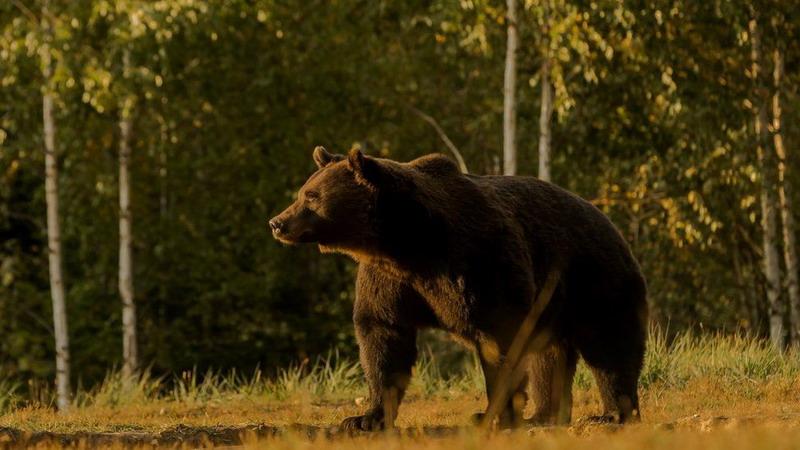 https: img.okezone.com content 2021 05 06 18 2406567 beruang-terbesar-eropa-ditembak-mati-pangeran-liechtenstein-jadi-tersangka-BGex8WgVuV.jpg