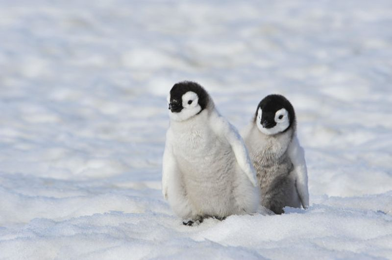 https: img.okezone.com content 2021 05 06 406 2406782 anak-6-tahun-tewas-gara-gara-mainan-penguin-sea-world-1Lit5RrnIT.jpg
