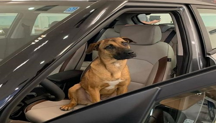 https: img.okezone.com content 2021 05 07 340 2406951 polisi-tangkap-2-pria-pembawa-78-ekor-anjing-di-penyekatan-kulonprogo-10-di-antaranya-mati-vvA2wtuzmP.jpg