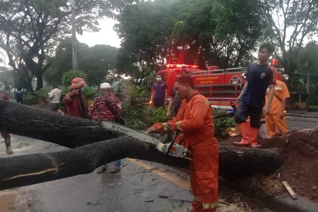 https: img.okezone.com content 2021 05 22 338 2414076 sejumlah-pohon-tumbang-karena-hujan-akses-juanda-margonda-depok-putus-iKymdgv8vg.jpg