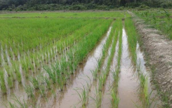 https: img.okezone.com content 2021 05 29 1 2417234 kementan-sarankan-petani-sukabumi-ikut-asuransi-pertanian-agar-dapat-pertanggungan-dKgMuPJjUE.jpg