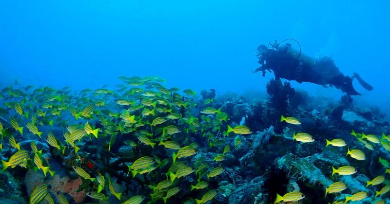 https: img.okezone.com content 2021 05 30 408 2417543 indahnya-kawasan-bawah-laut-daerah-destinasi-super-prioritas-likupang-E4UlY5U3ol.jpg