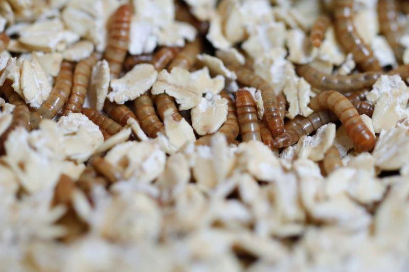https: img.okezone.com content 2021 06 01 301 2418503 restoran-ini-sajikan-makanan-dari-ulat-hingga-serangga-berani-coba-o6s5Q9DxFH.jpg