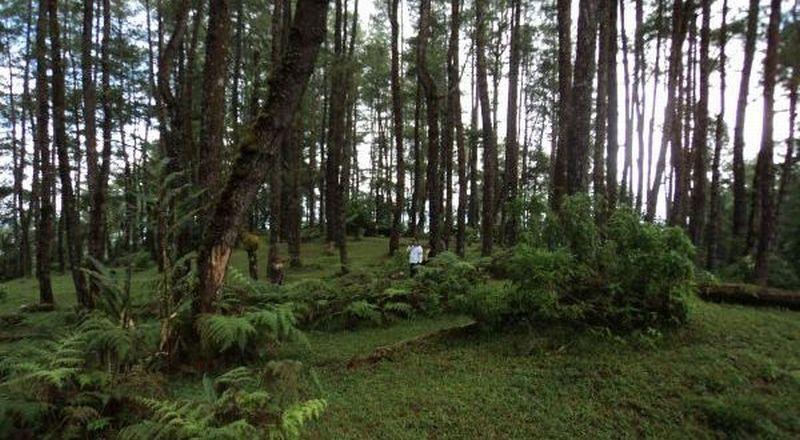 https: img.okezone.com content 2021 06 02 337 2418757 dikunjungi-pbb-pemerintah-sampaikan-hutan-indonesia-capai-karbon-netral-di-2030-Apg2cmwzbc.jpg