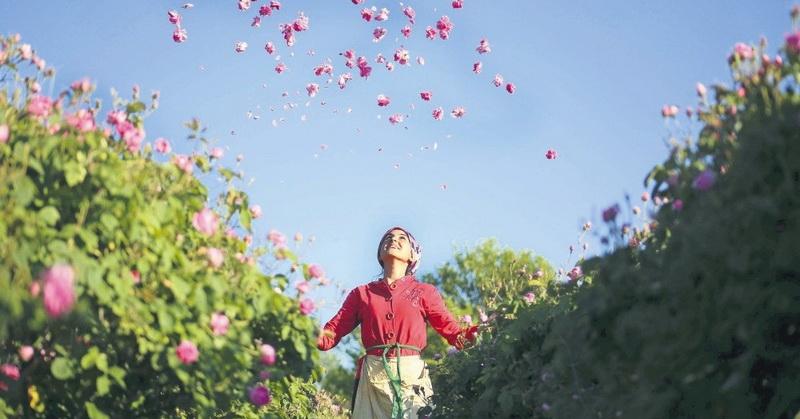 https: img.okezone.com content 2021 06 02 408 2418865 yuk-nikmati-indahnya-kebun-mawar-isparta-turki-d4kpiknQOS.jpg