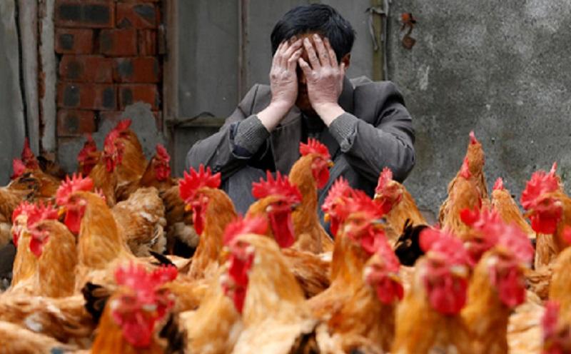 https: img.okezone.com content 2021 06 02 481 2418854 china-laporkan-kasus-infeksi-flu-burung-h10n3-pertama-di-tengah-pandemi-ycpIUr75v7.jpg