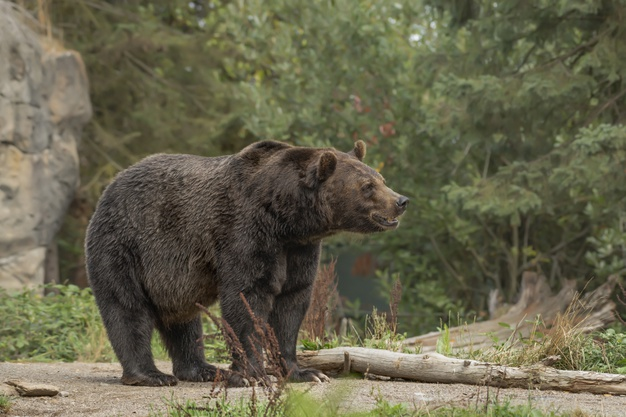 https: img.okezone.com content 2021 06 02 612 2418685 viral-aksi-heroik-wanita-selamatkan-anjing-dari-serangan-beruang-di-rumahnya-9Ee5rgizVR.jpg