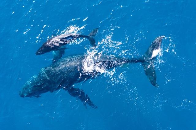 https: img.okezone.com content 2021 06 02 612 2419198 kaya-mendadak-nelayan-ini-temukan-ambergris-rp22-miliar-di-bangkai-ikan-paus-7tYLuz6PSL.jpg