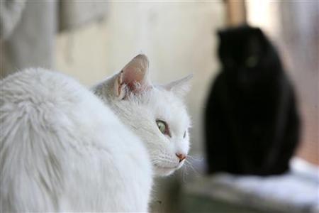 https: img.okezone.com content 2021 06 03 18 2419668 meninggal-4-bulan-wanita-di-spanyol-ditemukan-jadi-makanan-kucing-rTNXFMJz4l.jpg
