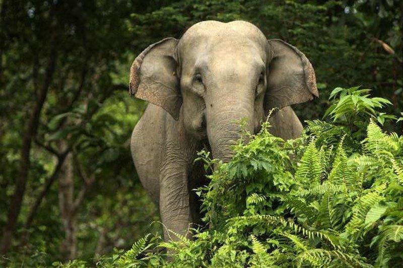 https: img.okezone.com content 2021 06 03 406 2419426 gerombolan-gajah-liar-masuk-kota-menolak-kembali-ke-hutan-9nvLLDuuof.jpg