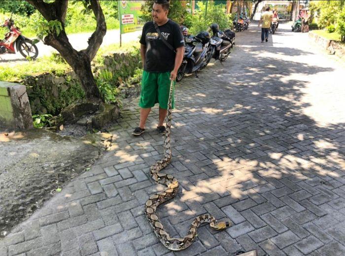 https: img.okezone.com content 2021 06 03 519 2419785 ular-piton-sepanjang-5-meter-ditemukan-di-pohon-depan-tk-nEjU8FmXfs.jpg