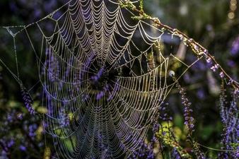 https: img.okezone.com content 2021 06 04 614 2420434 jaring-laba-laba-ternyata-sangat-kuat-rasulullah-pun-bisa-dilindungi-1ngFUY4mi6.jpg