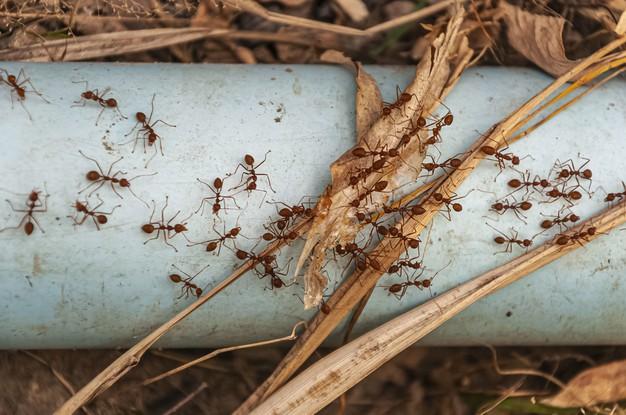 https: img.okezone.com content 2021 06 04 614 2420442 semut-sangat-kompak-serta-ajarkan-toleransi-terungkap-dalam-alquran-dan-sains-uJzkM9Oln4.jpg