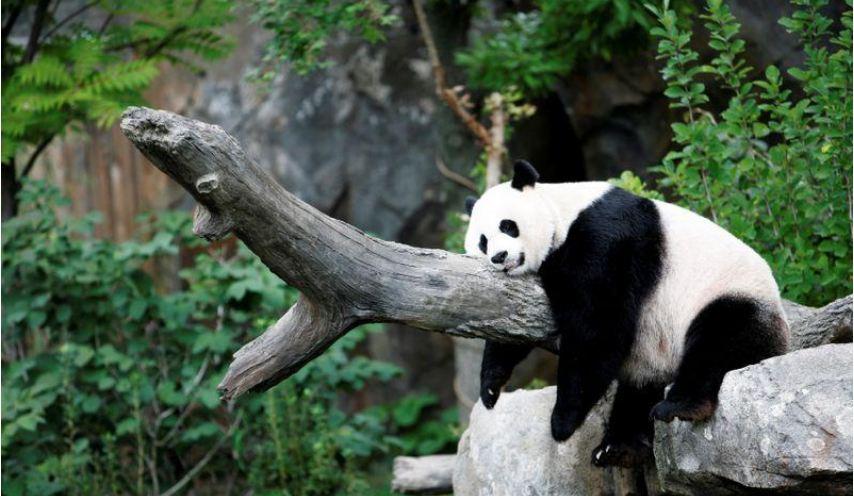 https: img.okezone.com content 2021 06 05 18 2420705 panda-hamil-harga-saham-restoran-melonjak-jyDBZSzqsU.JPG