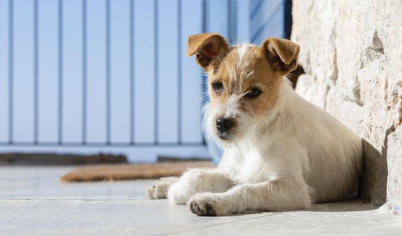 https: img.okezone.com content 2021 06 05 330 2420545 belajar-memahami-urusan-berebut-dunia-dari-sekelompok-anjing-PG8ZWIPRJf.jpg