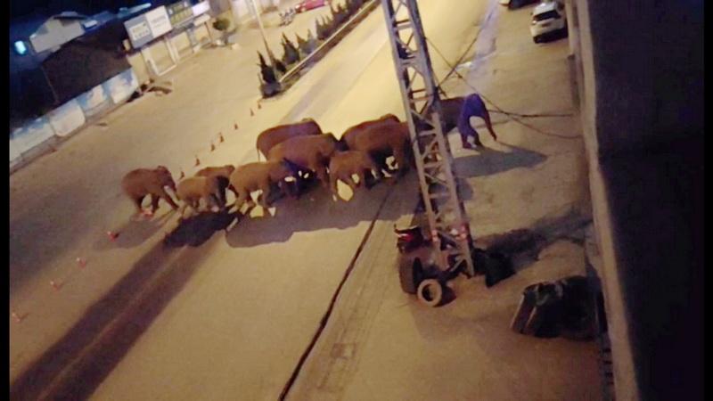 https: img.okezone.com content 2021 06 08 406 2421973 kawanan-gajah-liar-sebabkan-kerugian-hingga-rp15-1-miliar-di-china-nWKuLWGXKp.jpg