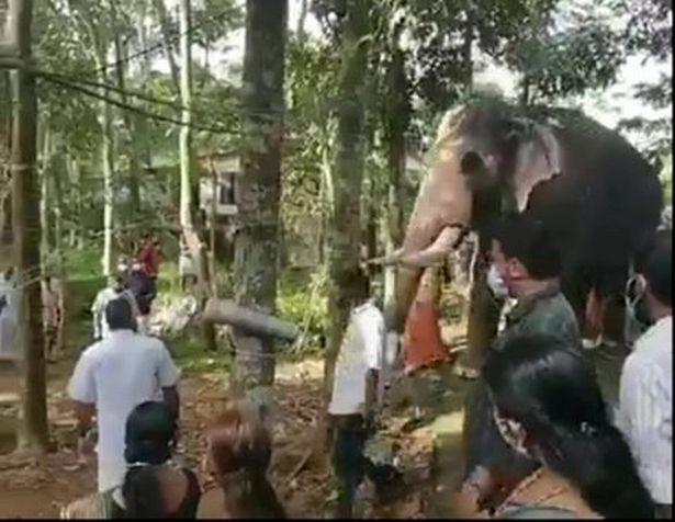 https: img.okezone.com content 2021 06 09 18 2422390 gajah-patah-hati-rela-berjalan-15-mil-demi-hadiri-pemakaman-sahabat-manusianya-pugWUlyvJi.jpg