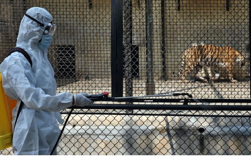 https: img.okezone.com content 2021 06 10 18 2422958 wabah-covid-19-menyerang-kebun-binatang-india-tutup-semua-cagar-alam-harimau-Ap5CZWhRz6.jpg