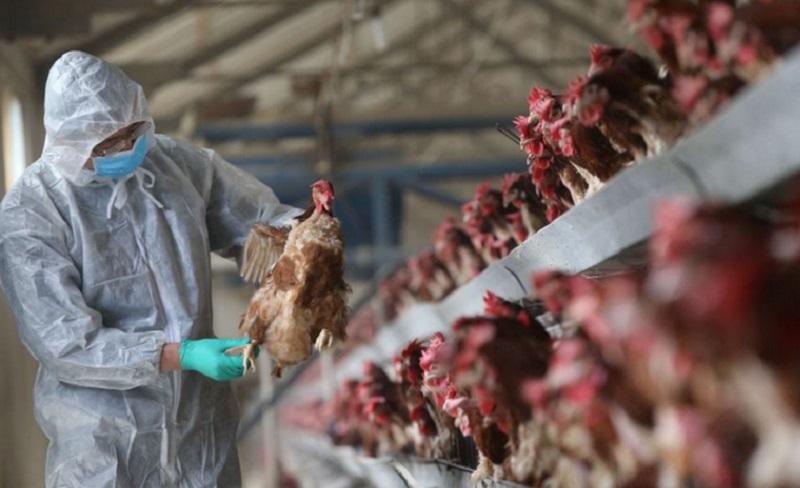 https: img.okezone.com content 2021 06 10 481 2422876 china-laporkan-wabah-flu-burung-4-249-ekor-burung-mati-mK2TAJ9sQW.jpg