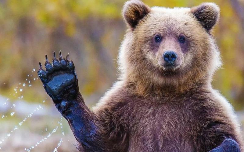 https: img.okezone.com content 2021 06 15 406 2425686 asyik-camping-di-pinggir-danau-2-wisatawan-diserang-beruang-jqOhkxdw1Z.jpg