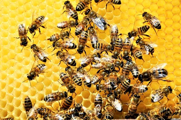 https: img.okezone.com content 2021 06 15 614 2425465 alquran-dan-sains-ungkap-lebah-mampu-produksi-obat-untuk-berbagai-penyakit-S5NpBZuSVo.jpg
