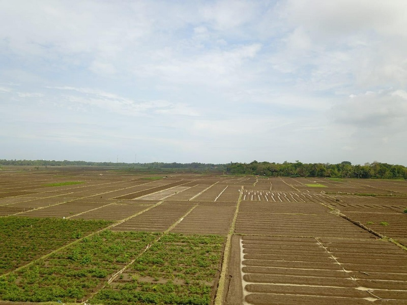 https: img.okezone.com content 2021 06 19 1 2427827 kementan-kembali-bangun-food-estate-berbasis-hortikultura-EbUKHUJMvS.jpg