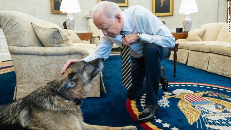 https: img.okezone.com content 2021 06 22 18 2428893 biden-umumkan-kematian-anjing-kesayangannya-bxjVz9iIz3.jpg