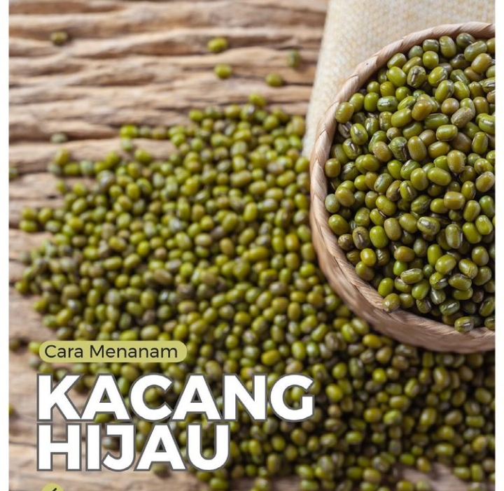 https: img.okezone.com content 2021 06 22 470 2428972 mudah-dan-praktis-begini-cara-menanam-kacang-hijau-di-rumah-AmpI8JsIIS.jpg