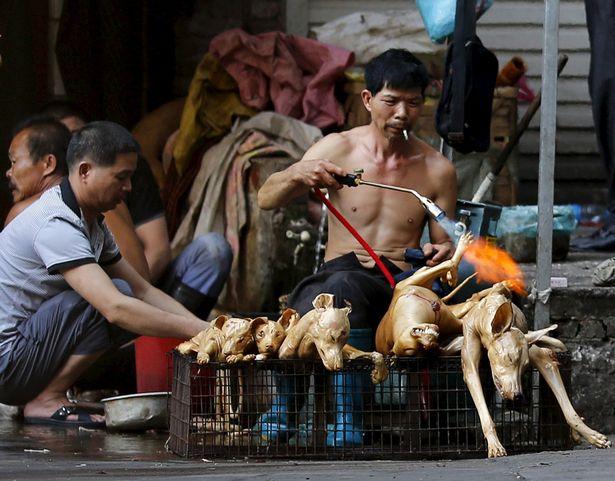 https: img.okezone.com content 2021 06 23 18 2429578 festival-anjing-direbus-dan-dibakar-hidup-hidup-mulai-digelar-di-china-L8jTyQ7IkG.jpg