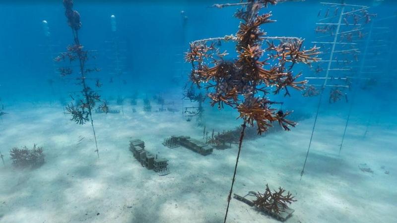 https: img.okezone.com content 2021 06 23 406 2429661 menakjubkan-ada-kota-rahasia-aneh-di-bawah-laut-WGGEOKkIYv.jpg