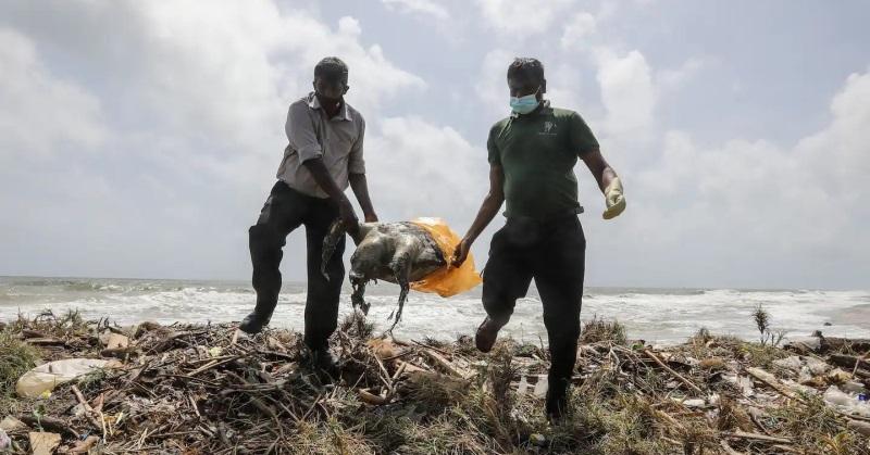 https: img.okezone.com content 2021 06 24 406 2430237 kematian-hewan-laut-di-pantai-masyarakat-sri-lanka-takut-kerusakan-lingkungan-ENTMgvYKCA.jpg