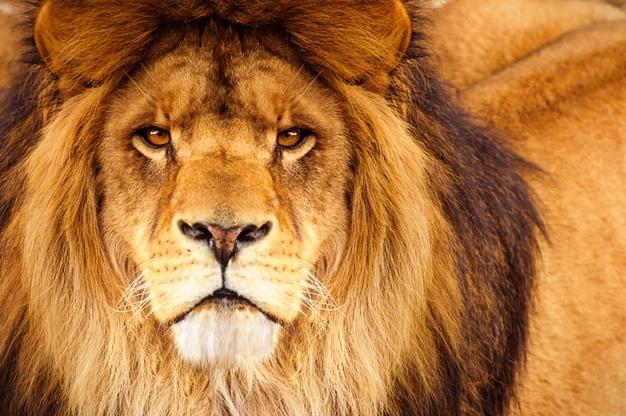 https: img.okezone.com content 2021 06 30 406 2433277 bawa-singa-ke-pesta-ulang-tahun-influencer-cantik-banjir-kecaman-8bAQuI7ntl.jpg