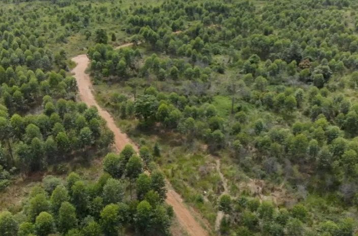 https: img.okezone.com content 2021 06 30 470 2433291 percepat-reforma-agraria-ri-sulap-kawasan-hutan-tak-produktif-l2MmknnaA3.png