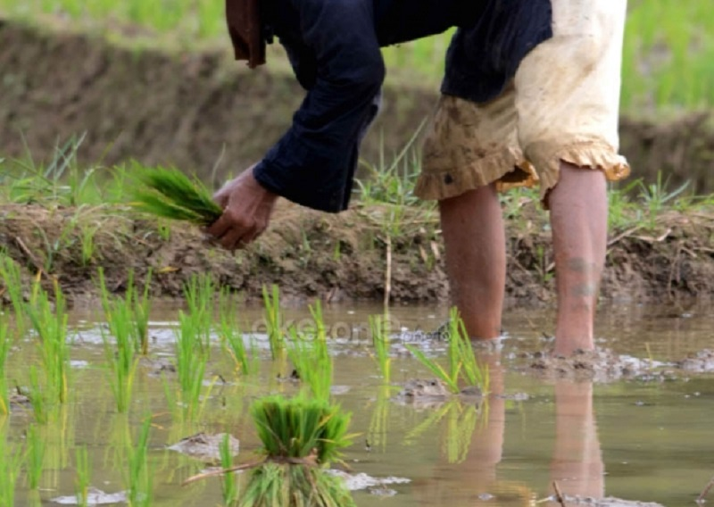 https: img.okezone.com content 2021 07 01 320 2433852 kesejahteraan-petani-ri-meningkat-ini-buktinya-XSeTPi1Yw3.jpg