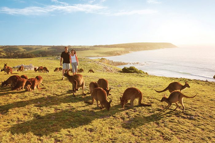 https: img.okezone.com content 2021 07 02 408 2434382 6-destinasi-wisata-keren-untuk-traveler-pencinta-alam-dan-hewan-JOQQkJ6anV.jpg