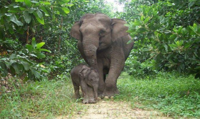 https: img.okezone.com content 2021 07 04 406 2435371 gajah-liar-mengamuk-satu-orang-tewas-diinjak-injak-y9xrmMD01U.JPG