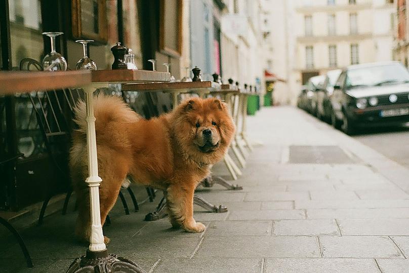 https: img.okezone.com content 2021 07 05 408 2435965 ini-7-kota-paling-ramah-anjing-dog-lovers-wajib-tahu-fg6ollh6XN.jpg
