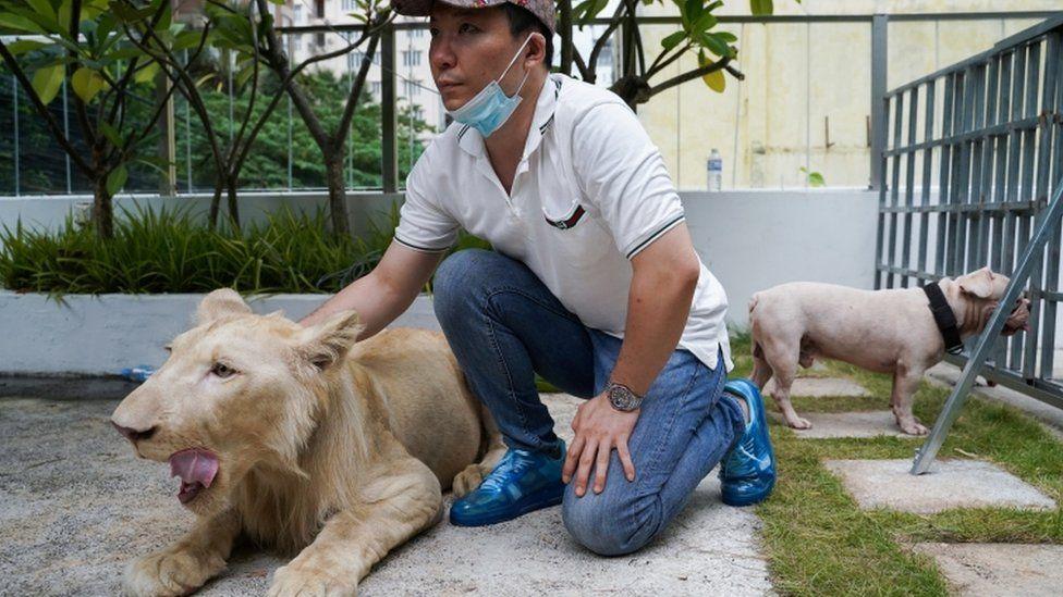 https: img.okezone.com content 2021 07 06 18 2436075 singa-dikembalikan-ke-pemiliknya-usai-campur-tangan-pm-kamboja-OT9hPut2uq.jpg