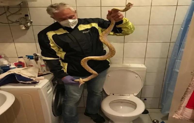 https: img.okezone.com content 2021 07 07 18 2436692 pria-ini-digigit-ular-piton-saat-duduk-di-toilet-RPTfXO7ZqQ.jpg
