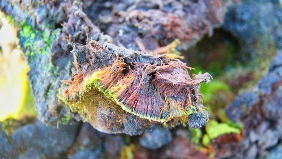 https: img.okezone.com content 2021 07 08 406 2437715 spesies-tanaman-baru-ditemukan-hidup-di-lapisan-es-antartika-W1F0iOPHMj.jpg
