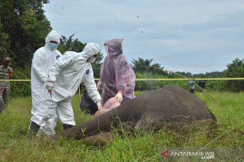 https: img.okezone.com content 2021 07 14 340 2440561 gajah-mati-tanpa-kepala-kuat-dugaan-karena-perburuan-6UBxDaUO34.jpg