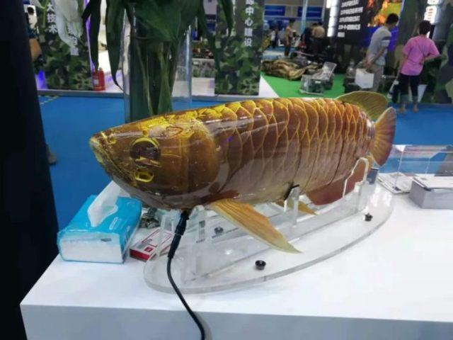https: img.okezone.com content 2021 07 14 612 2440727 unik-drone-ini-berbentuk-ikan-arwana-pandai-berenang-dan-punya-banyak-sensor-xDzFdezont.jpg