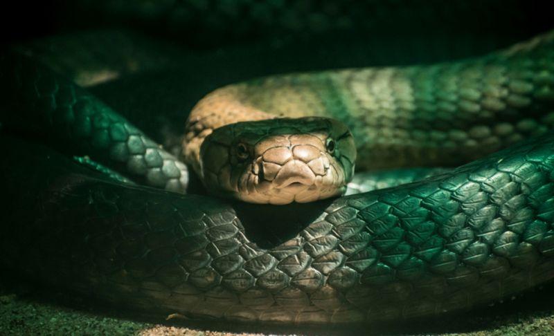 https: img.okezone.com content 2021 07 16 406 2441805 hiii-wanita-ini-temukan-18-ular-di-bawah-tempat-tidurnya-YQW4U8KTpi.jpg