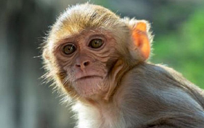 https: img.okezone.com content 2021 07 19 481 2442919 virus-monyet-pertama-ditemukan-di-china-sebabkan-dokter-hewan-meninggal-dunia-MBIV7BMtdp.jpg