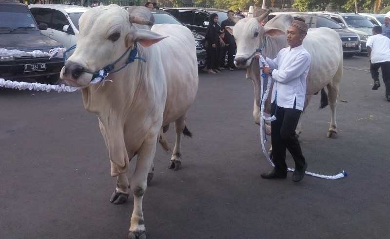 https: img.okezone.com content 2021 07 19 65 2442998 agrianita-ipb-university-hadirkan-pakar-penyembelihan-hewan-kurban-deGP3ZxKJb.jpg