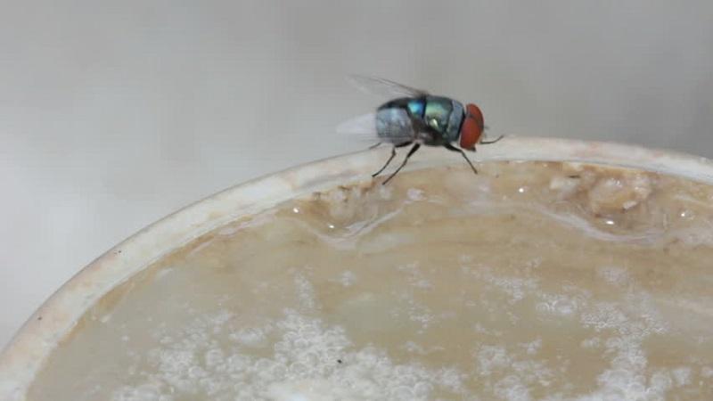 https: img.okezone.com content 2021 07 20 330 2443333 akibat-seekor-lalat-2-orang-ini-masuk-surga-dan-neraka-5pzxSILf3I.jpg