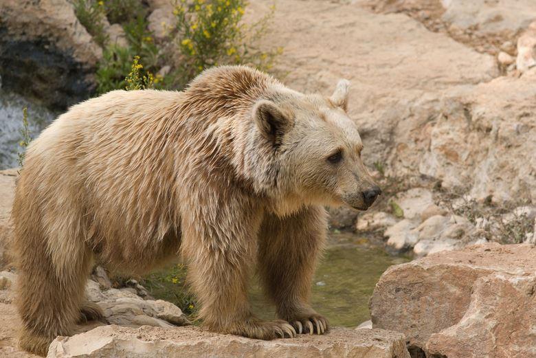 https: img.okezone.com content 2021 07 20 406 2443216 10-tahun-hidup-di-kandang-sempit-2-beruang-ini-traveling-ke-amerika-yL0S2JpyNm.JPG
