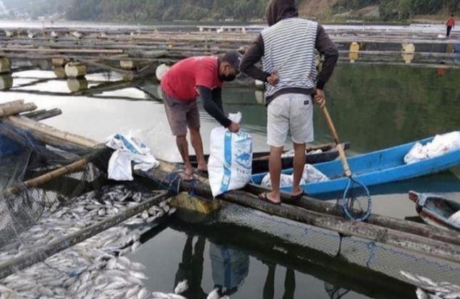 https: img.okezone.com content 2021 07 20 406 2443415 ribuan-ikan-nila-mati-keracunan-belerang-di-kawasan-wisata-danau-batur-xrwTyZGT6U.JPG