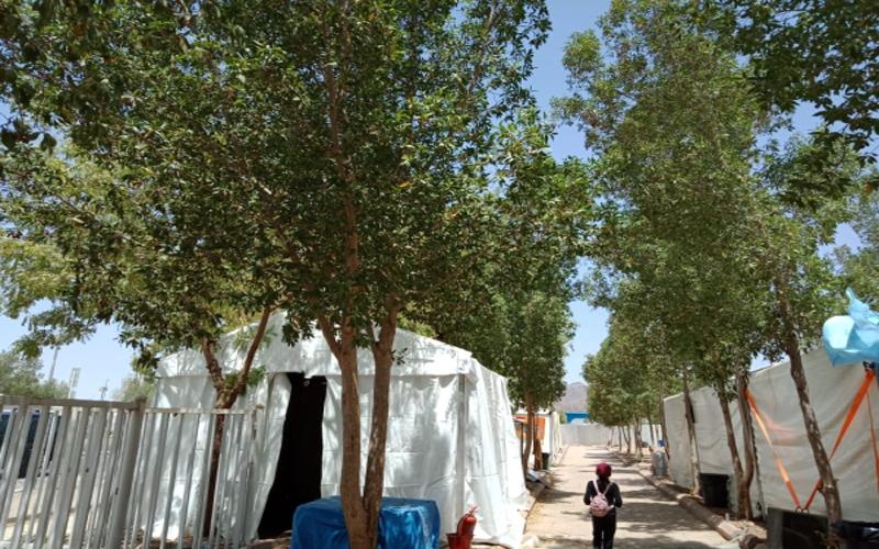 https: img.okezone.com content 2021 07 20 614 2443374 pohon-soekarno-membuat-jamaah-haji-menjadi-teduh-dan-nyaman-saat-di-padang-arafah-gNg9fl3gnj.jpg